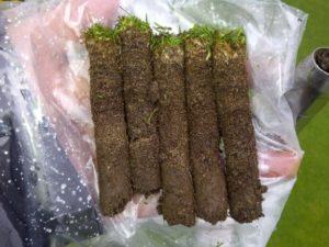 green organic